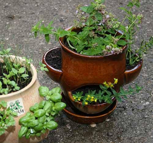 Petrželák - hrnec na bylinky béžový, Fortel