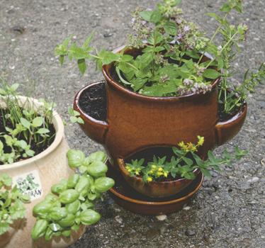 Petrželák - hrnec na bylinky hnědý, Fortel