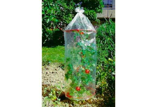 Fólie pro pěstování rajčat