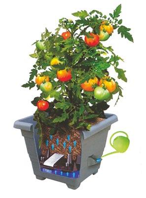 Samozavlažovací květináč Bergamot - antracit, 30 x 30 x 24 cm