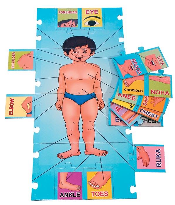 Učíme se anglicky - lidské tělo