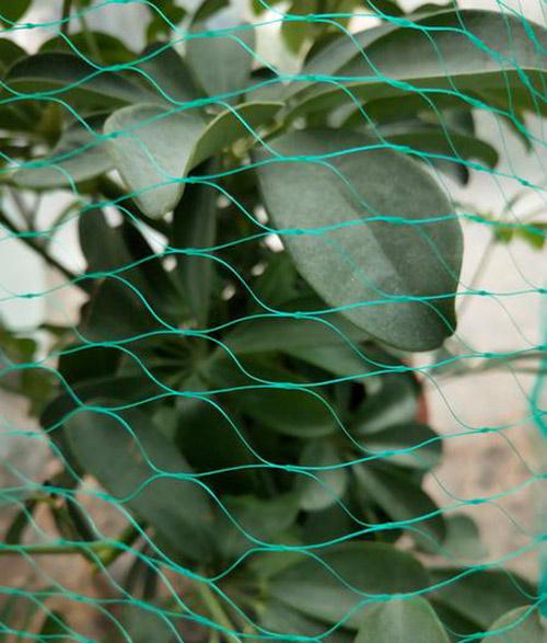 Ochranné sítě - síť proti ptactvu 3 x 5 m, zelená